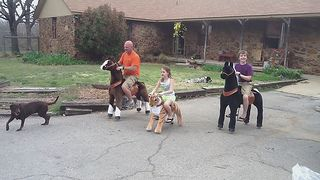 Ponycycles are a fun addition to any back-to-school event because we have a smaller size (for younger kids) and a larger size (adults up to 220 pounds can ride) so even the staff can get involved! Imagine horse races in the gymnasium! www.jumpinjiminyinc.com