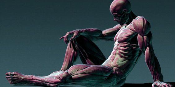 人間解剖学-3D-スカルプティング・イン・ZBrushのバイPainzang