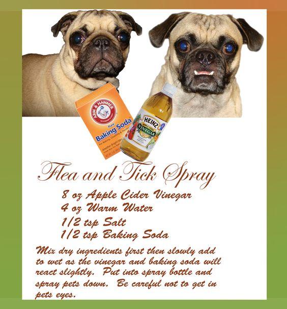 Flea and Tick Spray (12/16/2013) Pet Care (CTS)