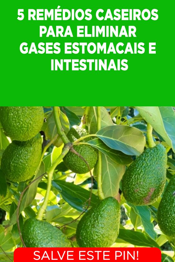 5 Remedios Caseiros Para Eliminar Gases Estomacais E Intestinais
