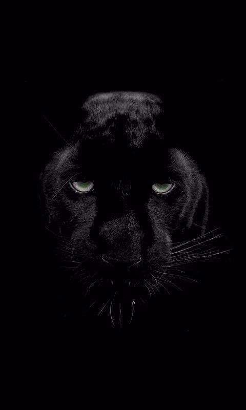 Black Panther Animal Wallpaper Awesome Animal Black Panther 480 800 Wallpaper Id Mobile Of Black Panther Black Panther Cat Animal Wallpaper Black Jaguar Animal Black jaguar wallpaper for mobile