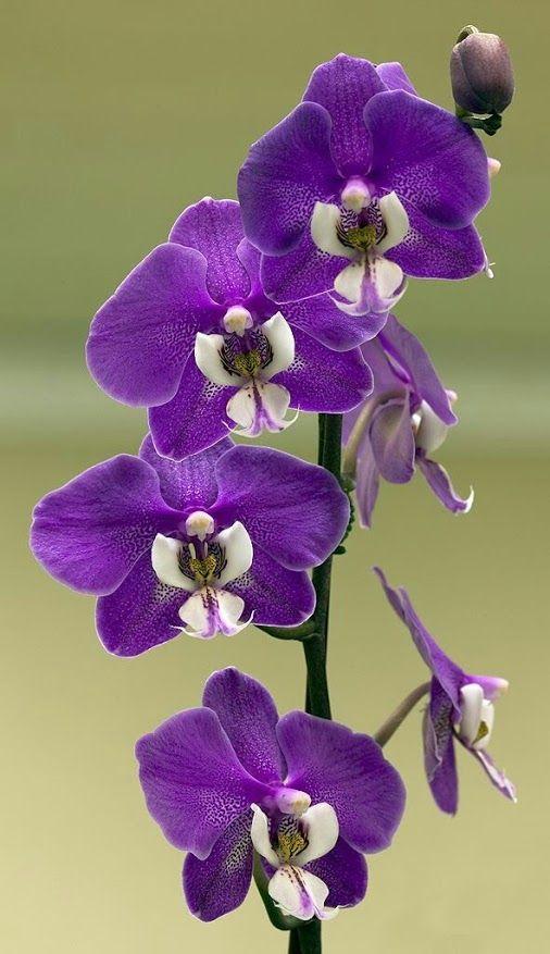 Orquídeas... e Jóias da Natureza!!! - Comunidad - Google+