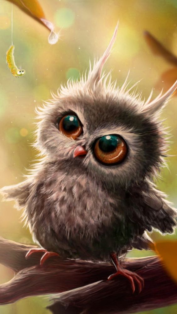 Apples, iPhone wallpapers and Funny owls on Pinterest