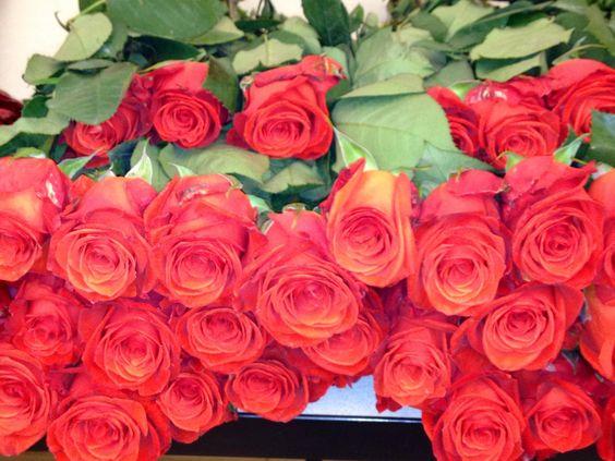 Red roses - Lilia Basulto