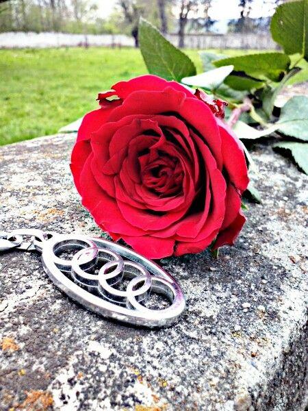 Beautiful Audi rose:)