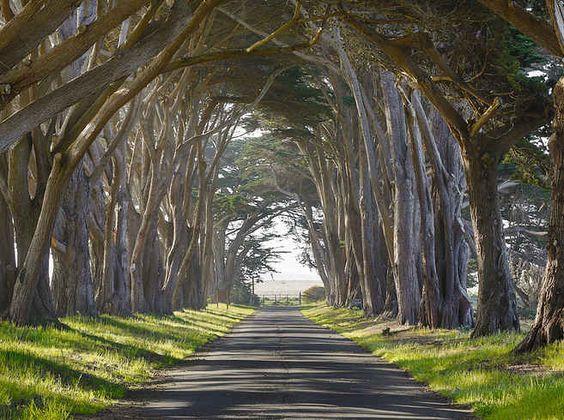 13 encantadores túneles de árboles por los que debes caminar