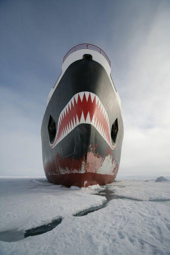 Eisbrecher Schiff ist bärenstark/Icebreaker ship is strong as an ox. http://en.wikipedia.org/wiki/Yamal_%28icebreaker%29