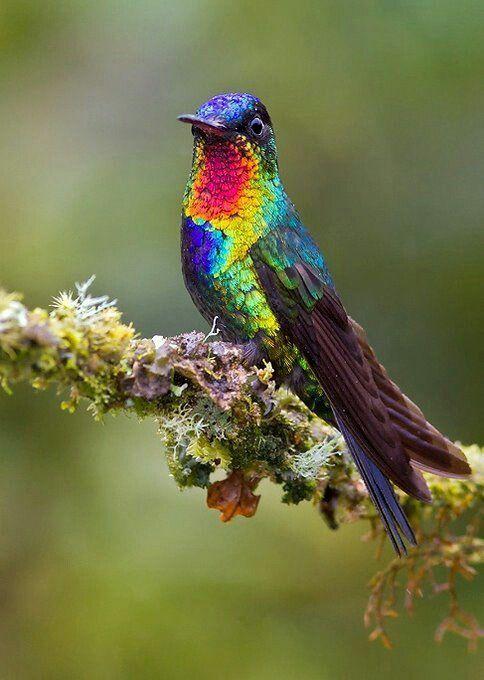 Pin De Neida En Pajaros Pequenos En 2020 Aves Pajaros Aves
