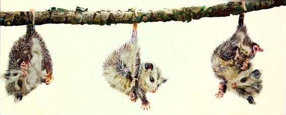 Opossumkinder Faber Castell Polychromos, Acryl (Verkauft)