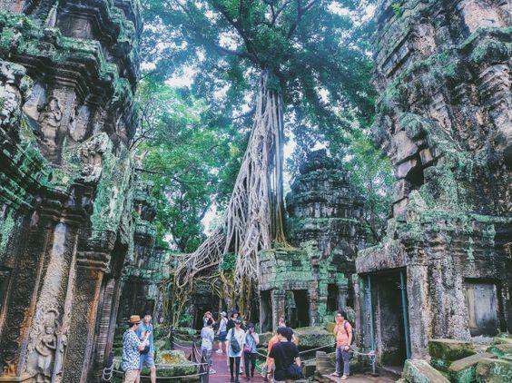 Đền được bao phủ bởi những cây xanh to lớn