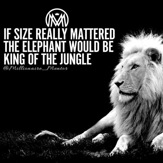 """How about a nice cliche lion quote to start your morning! Have a good day! #millionairementor"":"