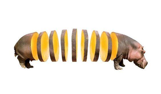 動物水果混搭系列,奇思妙想挑戰你的思維極限 1