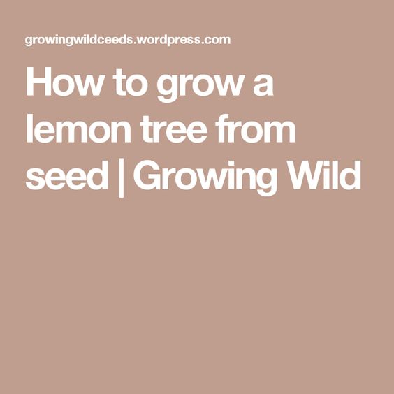How to grow a lemon tree from seed | Growing Wild