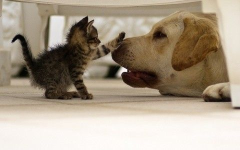 Mr, maybe I am small but I AM The cat, you're a dog...So I am The Boss. Got it?: