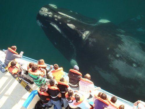 Dwarfed by a whale.