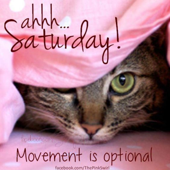 Ahhh... Saturday Morning ! Movement is optional