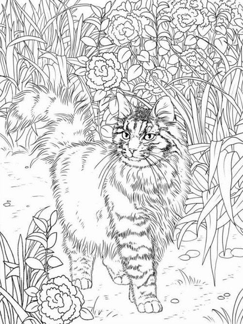 Intricate Cat Coloring Pages : Best coloring books for cat lovers