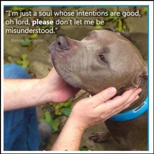 ♥ Pit bulls are the sweetest loveable dogs and deserve great loving homes and no one should believe all of the dumb people who spread all of those vicious rumors about them. Adopt a pit bull today. They all deserve wonderful loving homes! ❤️