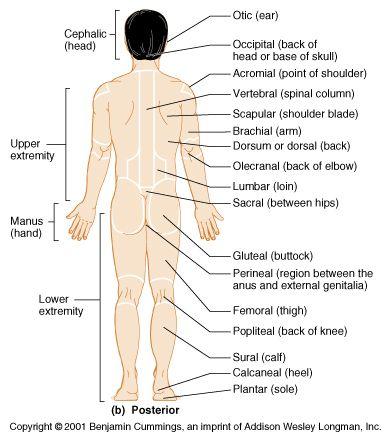 language the o 39 jays and medical on pinterest : anatomical diagram - findchart.co