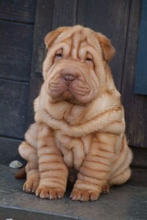 oh my the anti-wrinkle cream didn't work then, adorable