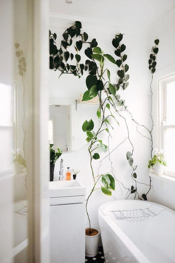 Trailing Indoor Plants That Spill Over The Edge Of Shelves Benches Or Even Drip From Hanging Baskets Suspended From The Ceiling Ar In 2020 Indoor Climbing Plants Interior Bathroom Plants