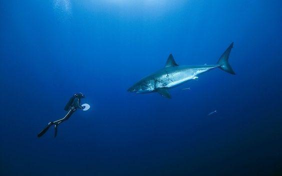 Resultado de imagem para fundo do oceano