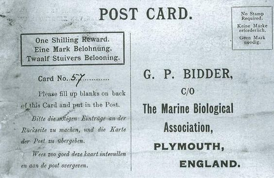 Garrafa com mensagem lançada no mar é achada após mais de 100 anos http://glo.bo/1NK452F