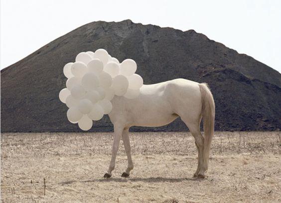 white balloons white horse: White Balloon, Andrea Galvanizing, Art Photography, White Horses, Horse Balloons, Andrea Galvani, Balloon Head, Balloon Animal
