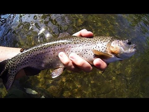 This is a great compilation video of fly fishing for multiple species of fish... It Is HD quality.. enjoy and thanks for watching!