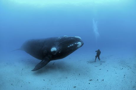 No big deal, just hanging with my whale.