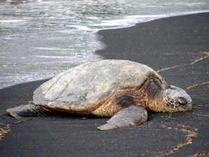 Righteous is the Turtle. Protect Him! : Wildlife Promise: