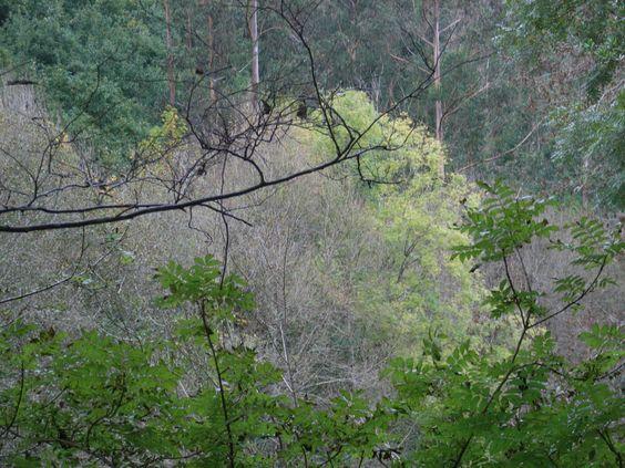 As árbores que deixan ver o bosque