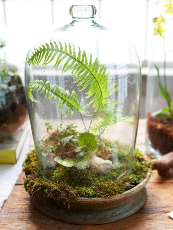 Miniature Gardens: Cloche Terrarium, Mini Garden, Fairy Garden, Terrarium Ideas, Miniature Landscape