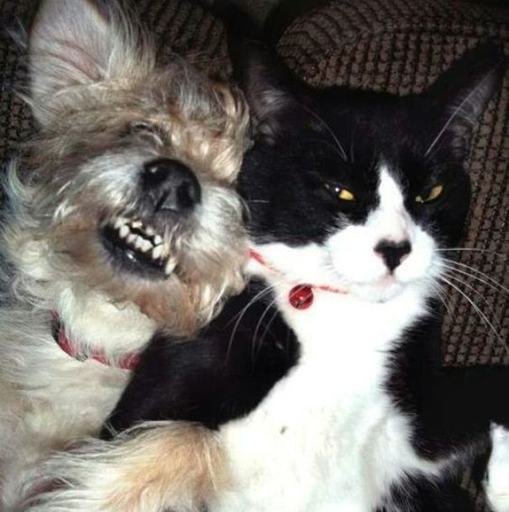 23 εντυπωσιακές Φωτογραφίες Αποδεικνύοντας ότι οι σχέσεις γάτας και σκύλου είναι οι πιο δύσκολες (Μέρος 2ο)