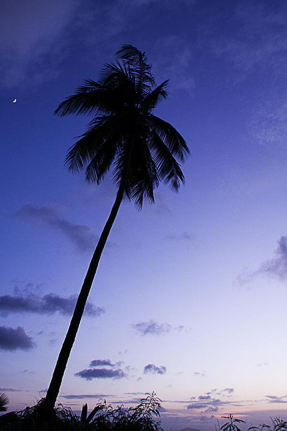 ✮ Palm Tree Silhouette at Twilight