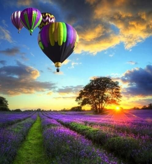 A Balloon Ride over a lavender field in the France countryside. Absolutely Beautiful ♥