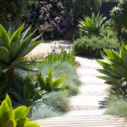 A planting style that you find in successful gardens is 'sculptural' plants mixed with soft foliage and flowers. Here are some tips about how to do it well.