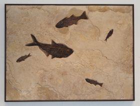 Green River Fish Fossil Mural