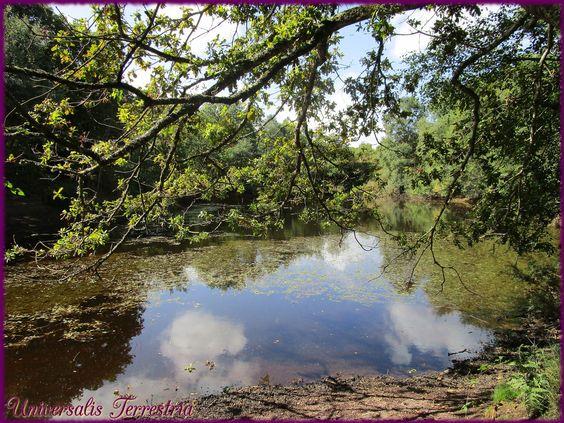 https://flic.kr/p/KZi6Ea | Broceliande - J1 val sans retour petit lac avant le…