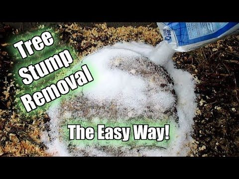 Easiest Way To Remove A Tree Stump Yourself Painlessly Video