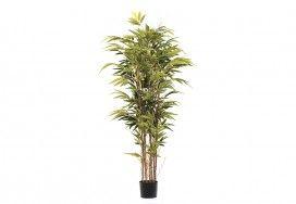 Indoor Plants   Super Amart