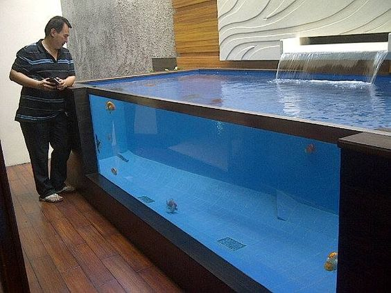 Does anybody want this set up at home for proper goldfish for Koi fish tank setup