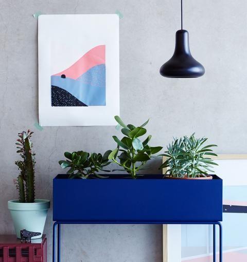 Zimmerpflanzen in Szene setzen [LIVING AT HOME]