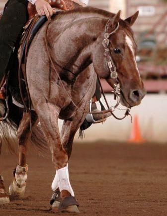 the rocking horse winner theme essay