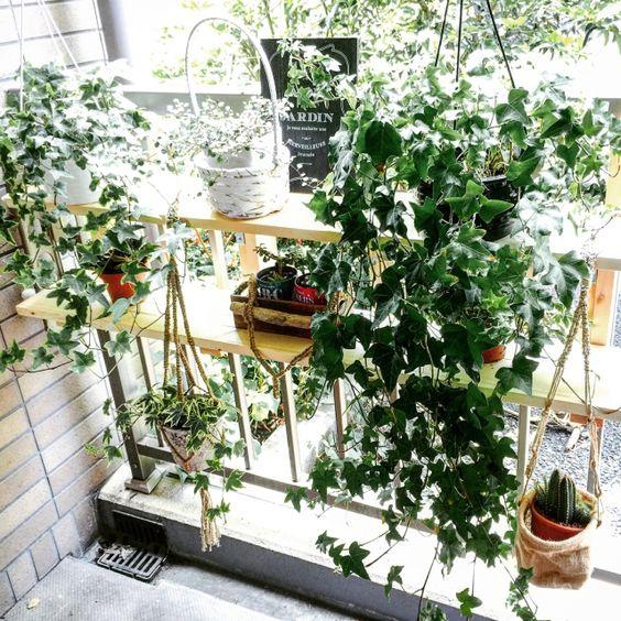 gofunkさんの、棚,観葉植物,ナチュラル,IKEA,ベランダ,ガーデニング,DIY,北欧,多肉植物,セリア,ベランダガーデニング,ベランダガーデン,プランター台,プランター棚,のお部屋写真: