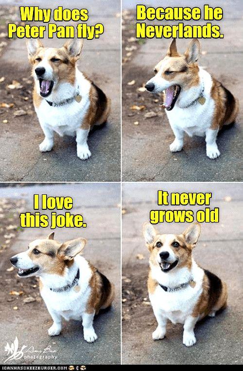 Bahahahaha Dog Memes So Funny Dog Meme Cartoon Funny Animal Jokes Dog Jokes Funny Dog Memes