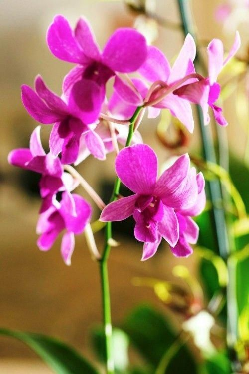 Orchids Sale Tesco Orchids For Sale Tesco Orchids Orchids For Sale Tesco Orchids In 2020 Orchid Roots Growing Orchids Orchid Care