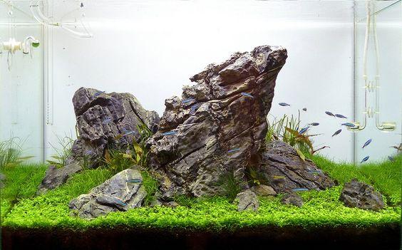 Attila aquarium and aquascaping on pinterest for Landscaping rocks for aquarium