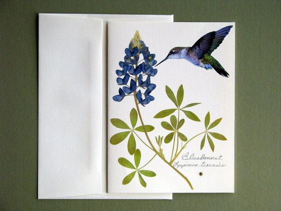 Bluebonnet wildflower with hummingbird and metal star, Texas bluebonnet greeting card, no.1152