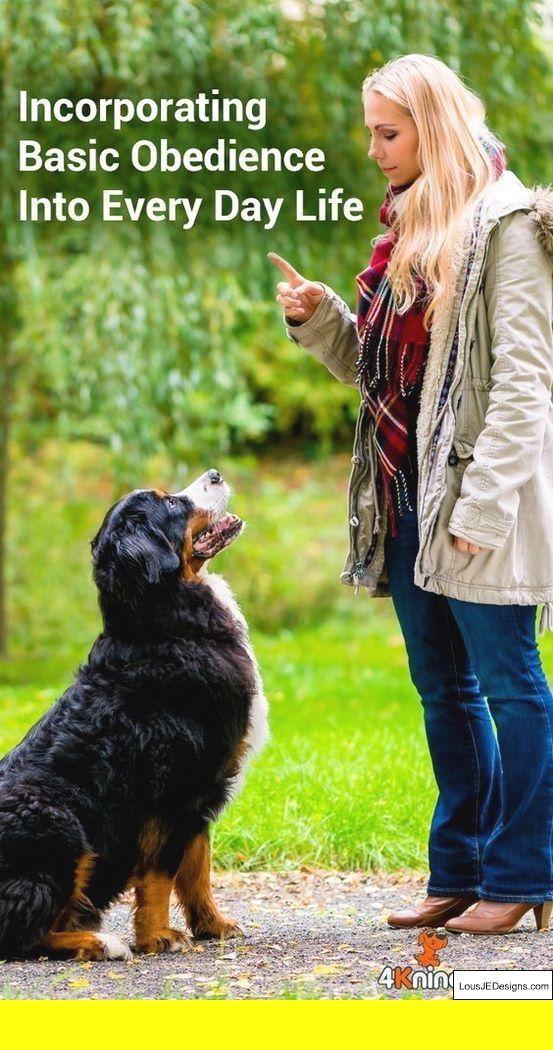 Dog Obedience Training In Colorado Springs 26252816
